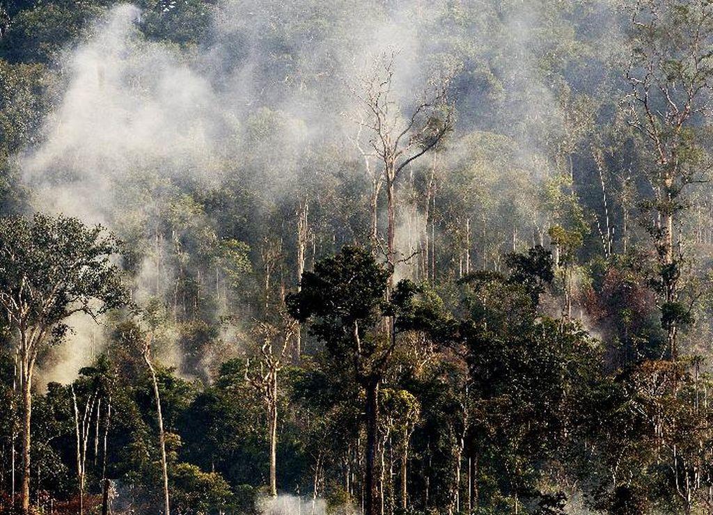 亚马孙森林大火部分照片不实